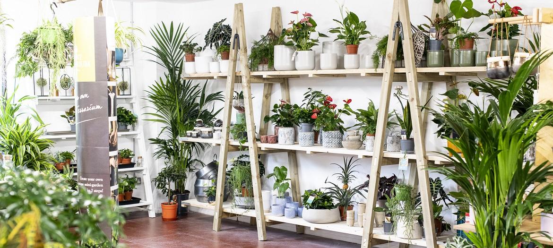 Rutland Garden Village Plants